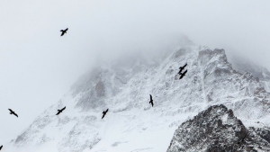 cropped-cropped-birds-on-a-mountain-1400x400.png